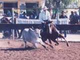 Kool Play, Cloncurry Stockmans Challenge